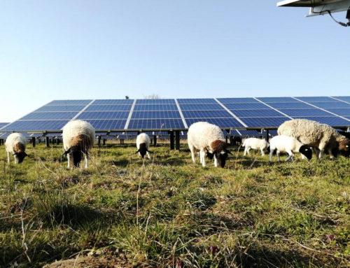 Start of spring at the solar park Leizen